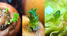 14 Store Bought Vegetables & Herbs You Can Regrow by HiRezVids